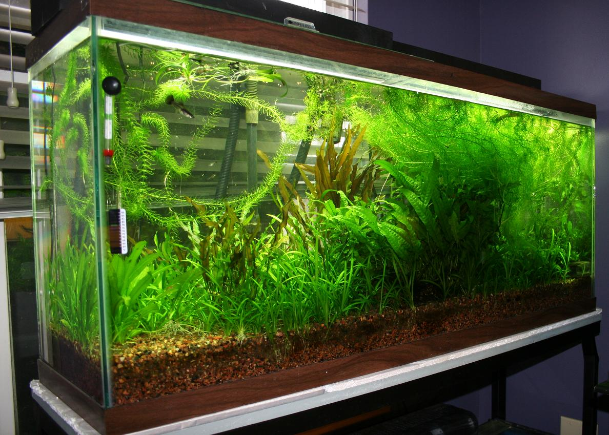 Fish tank plants aquarium fish tank plants discount for Planted tank fish